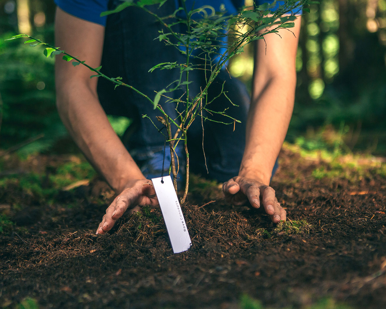 Rove Concepts planting trees for sustainability